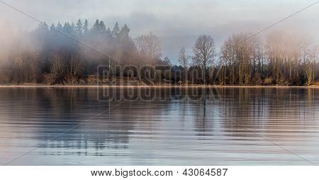 Misty Forest Across River