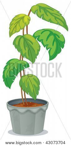 Illustration of a green tall plant in a pot on a white background
