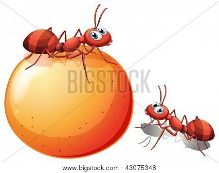 Illustration of a potato with ants on a white background