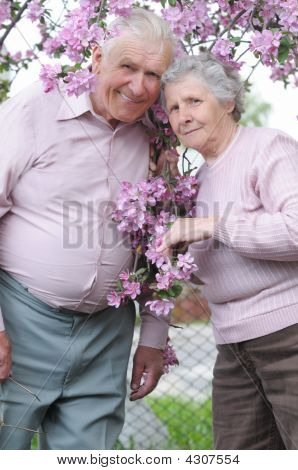 Happy Old Couple On The Flowering  Apple-tree  Background