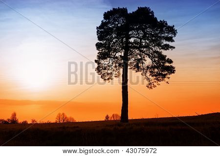 Alone tree on sunset