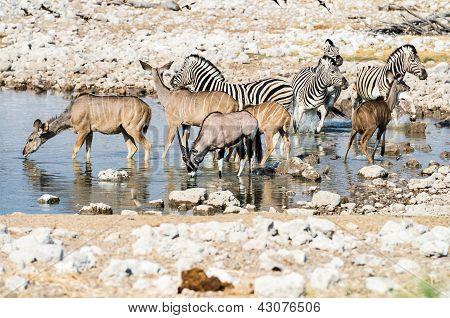 Wildlife at a waterhole in Etosha National Park, Namibia