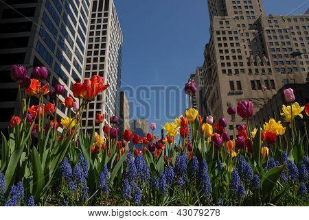 Centro com flores