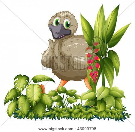 Illustration of an emu hiding in the garden on a white background