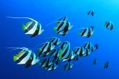 stock photo of shoal fish  - Tropical Fish - JPG