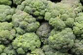 picture of cruciferous  - Fresh broccoli is a delicious vegetable that can be served many ways - JPG