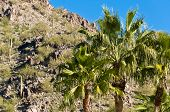 stock photo of piestewa  - Palm Trees With Piestwea  - JPG