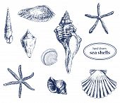 stock photo of snail-shell  - Set of various hand drawn sea shells - JPG