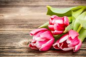 image of glorious  - Tulips on rustic wooden table - JPG