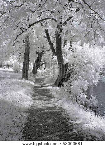 Path Ashore The White Lake
