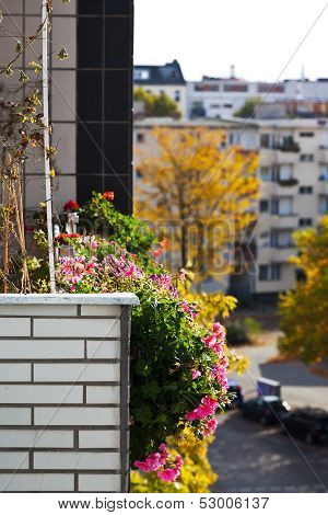 Bed Of Flowers On The Balcony Of Urban House