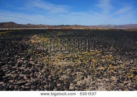 Desert Lava Rocks