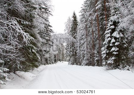 Winter Forest And A Snow Road