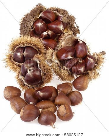 Chestnuts with Husk Isolated on White Background