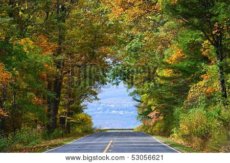 Asphalt road among autumn trees which shape a fall color tunnel