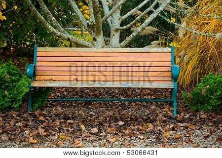Peaceful Empty Park Bench