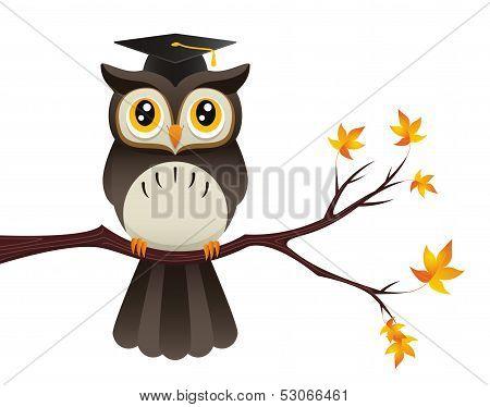 Teacher Owl