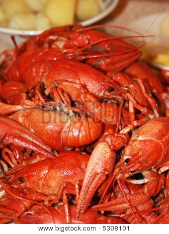 Fresh Boiled Crawfish