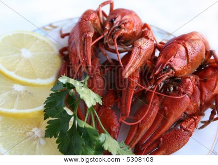 Fresh Sea Dish