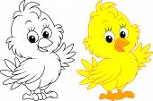 foto of fowl  - Little yellow chick - JPG