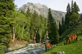 stock photo of wild horses  - wild horses grazing beside a river that flows down a mountain - JPG