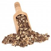 picture of dong  - Angelica herb root used in chinese herbal medicine in a wooden scoop over white background - JPG