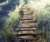 stock photo of board-walk  - boardwalk in forest - JPG