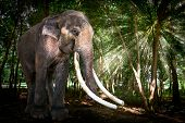 stock photo of herbivorous  - The Big Bull Asia Elephant in Forest - JPG