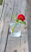 foto of tumbler  - red flower in the tumbler with water on the wood old board - JPG