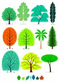 stock photo of willow  - 11 Various of Trees in simplified flat vector cartoon including Oak - JPG