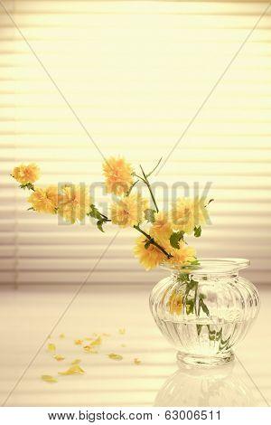 Yellow Japanese Kerria in Flower Vase