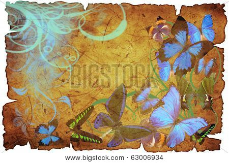 Butterflies On Old Vellum