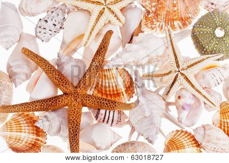 various types of sea shells isolated on white background
