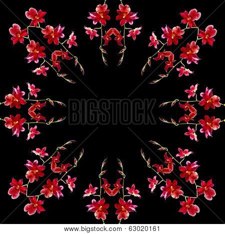 Frame card of Orchid Cambria Burrageara isolated on black background