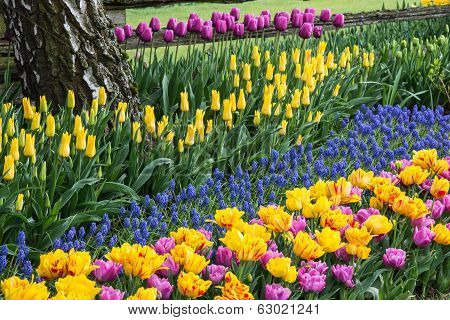 Colorful Spring Flower Garden