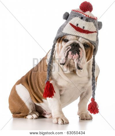 dog wearing winter hat