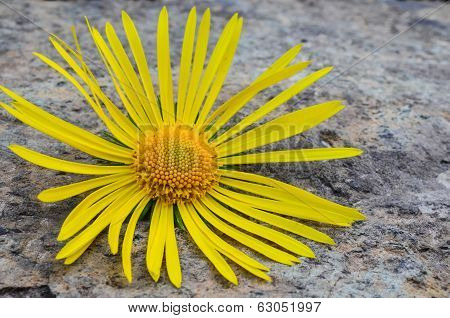 Flower On The Stone
