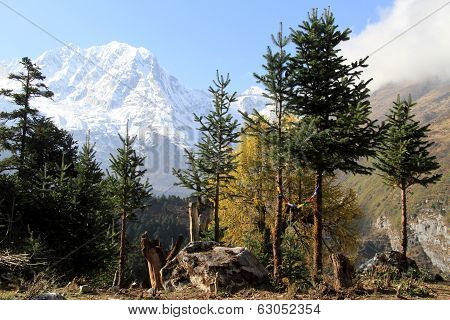 Snow Peak And Forest
