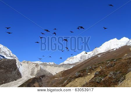 Mountain And Crows