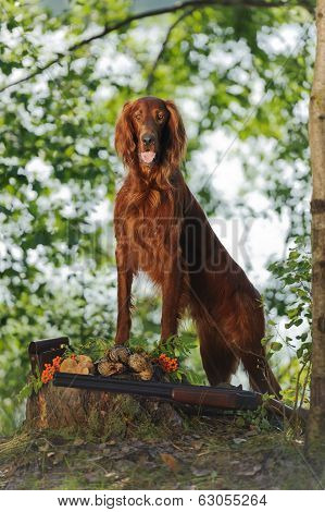 Gun Dog Near To Trophies, Vertical, Outdoors