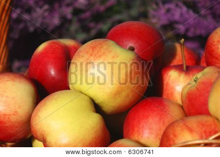 Apples In A Summer Garden