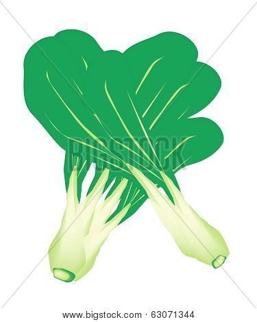 Fresh Green Baby Pakchoi On White Background