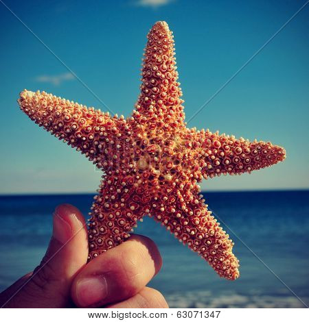 picture of someone holding a starfish with the ocean in the background, with a retro effect