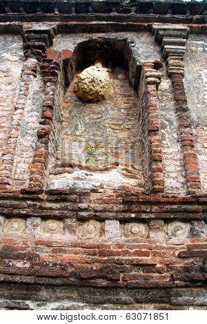 Nest On The Shrine