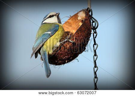 Tiny Garden Bird On Feeder