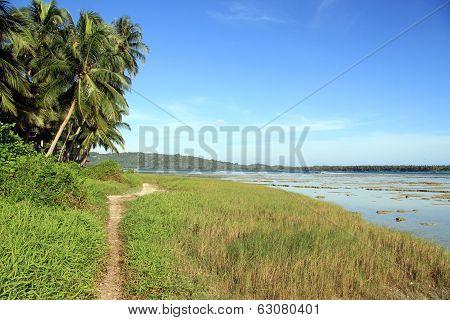 Footpath Near Palm Trees