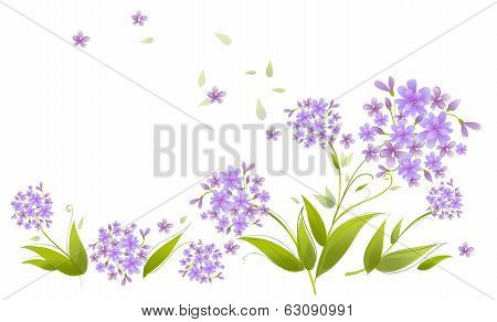 Spray Of Blue Agapanthus