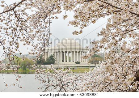 Jefferson Memorial during Cherry Blossom Festival - Washington DC, United States of America