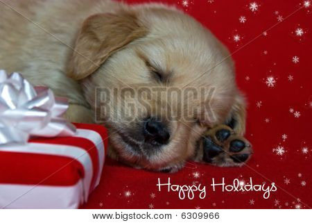 Happy Holiday Pup