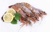 foto of tiger prawn  - big fresh tiger prawns - JPG